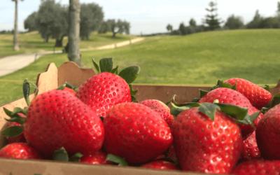 Nuevos desafíos de la agricultura ecológica