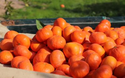 El uso de bioestimulantes para la exportación hortofrutícola
