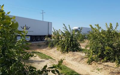 Andalucía en segunda posición como exportadora del sector agro a China